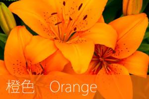 橙色オレンジ